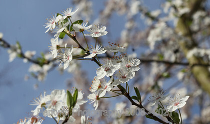 IMG 5257 